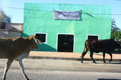 toros paraguay